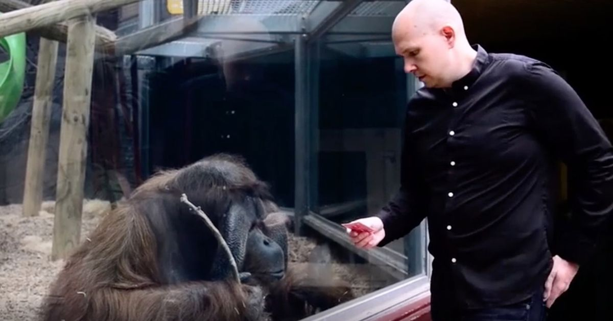 Magician shares 'trick he'll never forget' in heartbreaking tribute to orangutan