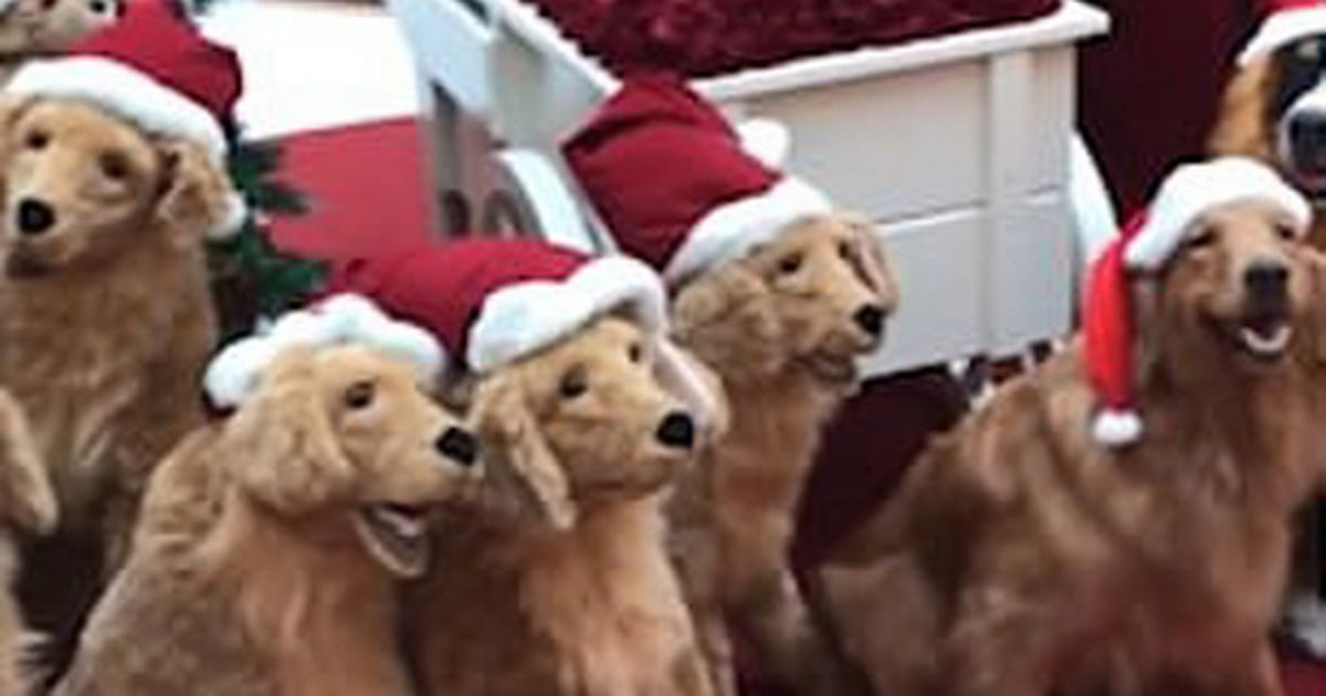 Golden Retrievers smuggled into festive display look identical to robot dogs
