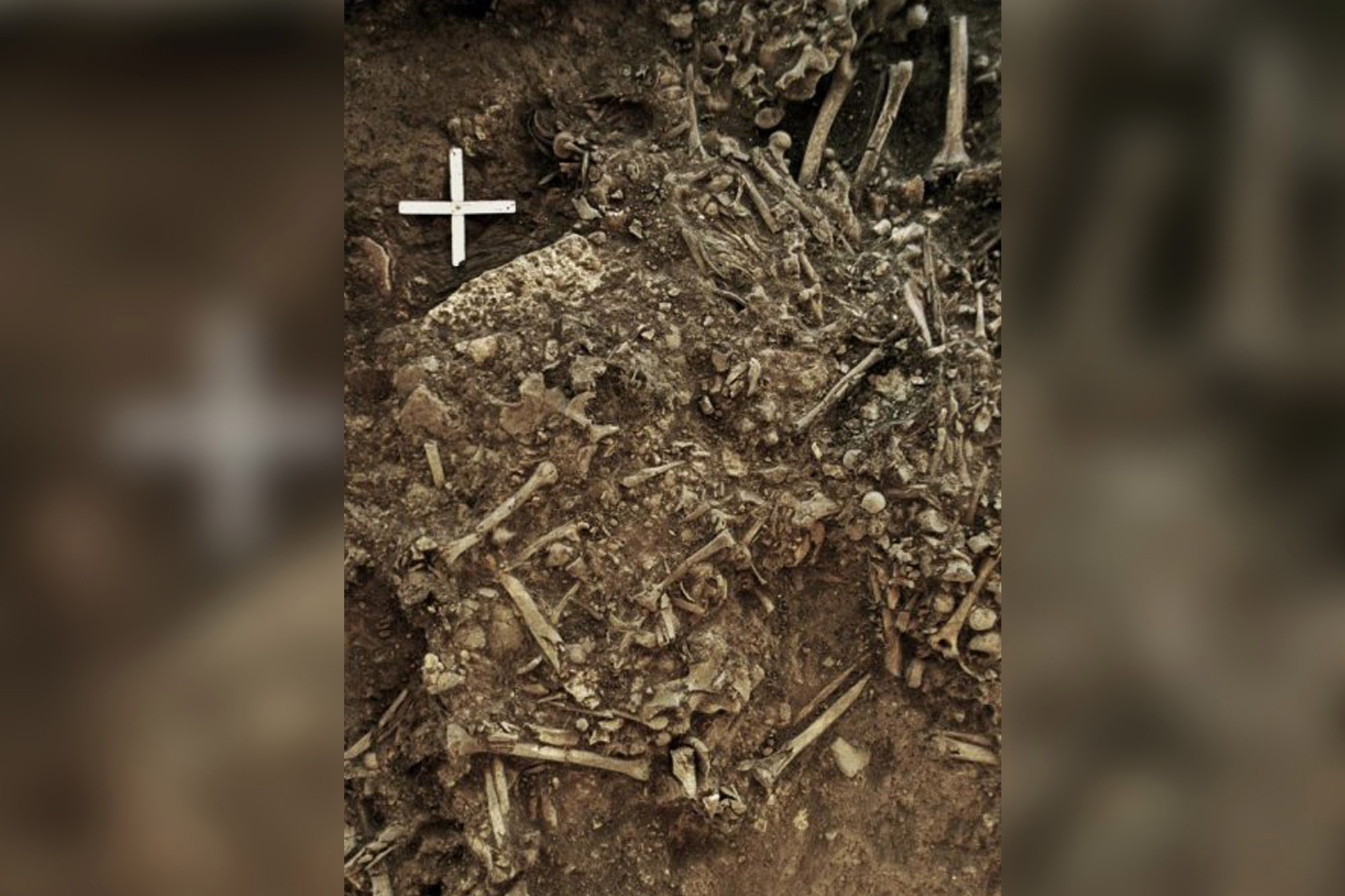 Oldest strain of plague found in 5,000-year-old human remains