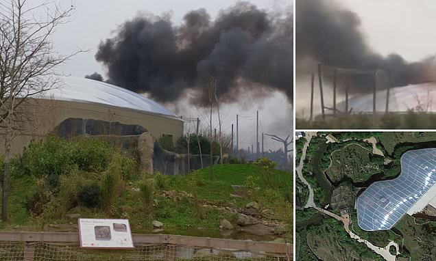 Chester Zoo is EVACUATED as huge fire breaks out