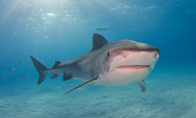 Scuba diver, 35, dies in brutal shark attack in Mexico