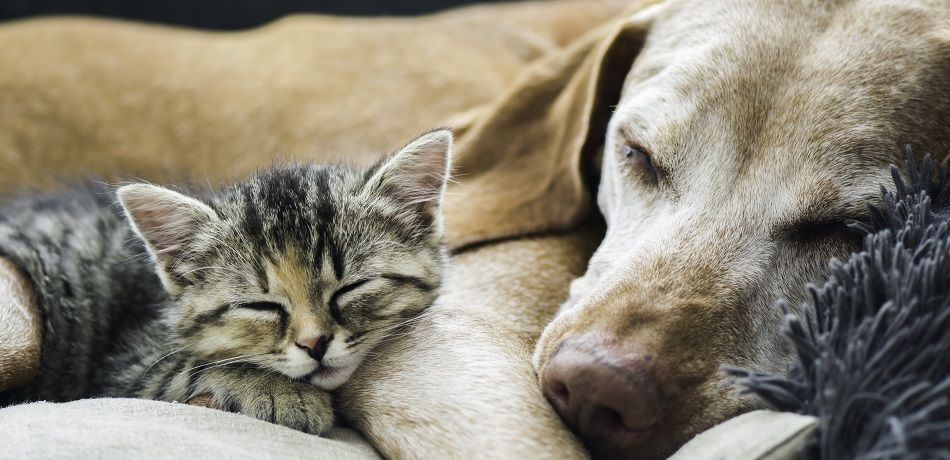 New York Opens First Pet-Friendly Domestic Violence Shelter