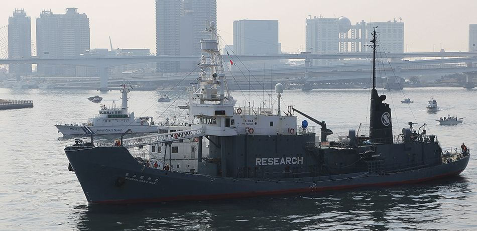Japan Will Resume Commercial Whaling, According To Reports