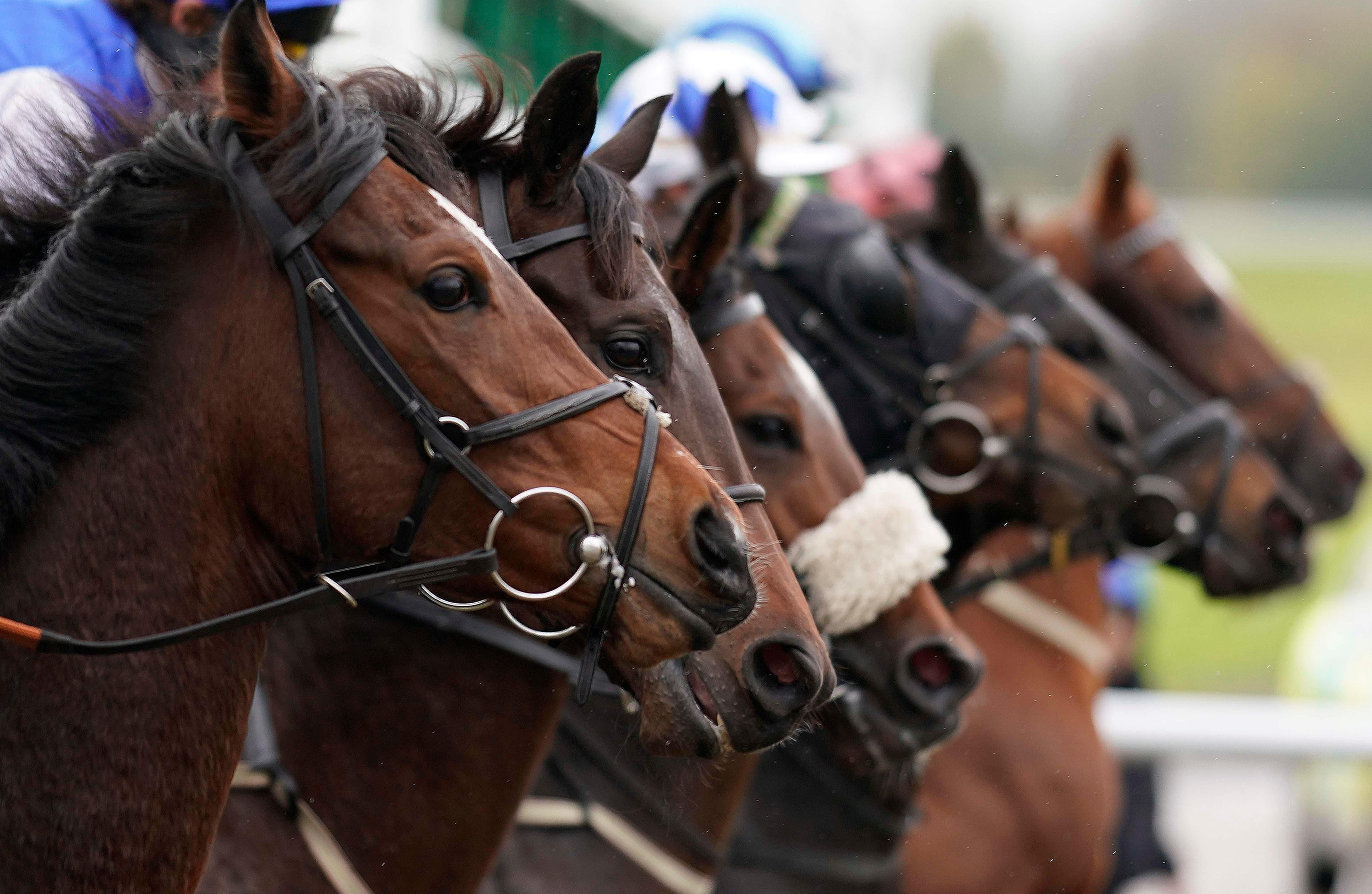 Templegate's racing tips: Lingfield, Southwell and Fakenham – Templegate's betting preview for racing on Tuesday, December 4