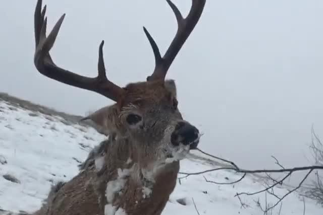 Shock pics show deer found frozen to death while trying to escape icy ditch – The Sun