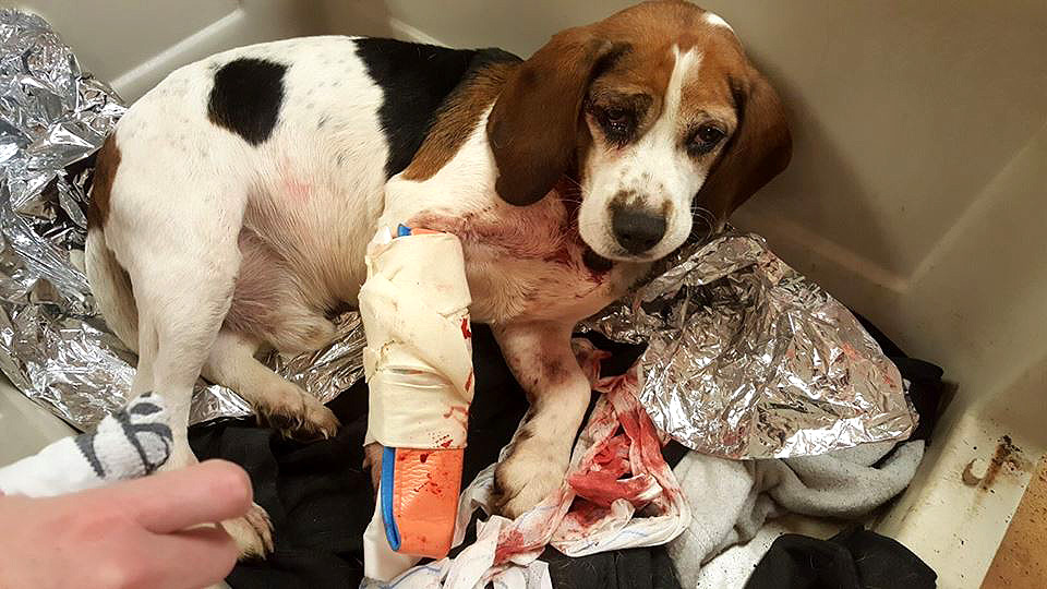 New York Police Seeking Justice for Two Dogs Thrown Out of Moving Truck onto Interstate