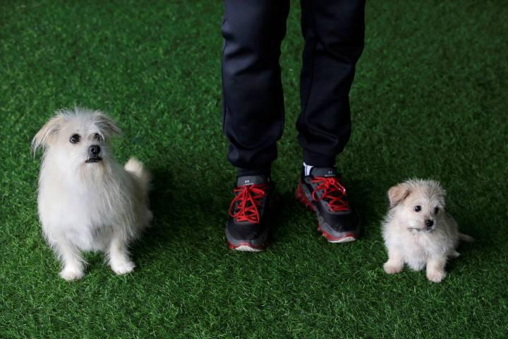 Man's best friend 2.0: China offers pet cloning service