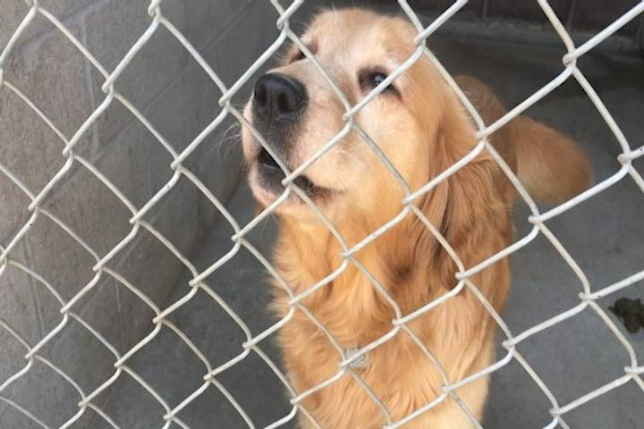 Colborne, Ont., woman receives lifetime ban on dog ownership after dozens in poor care found at her home
