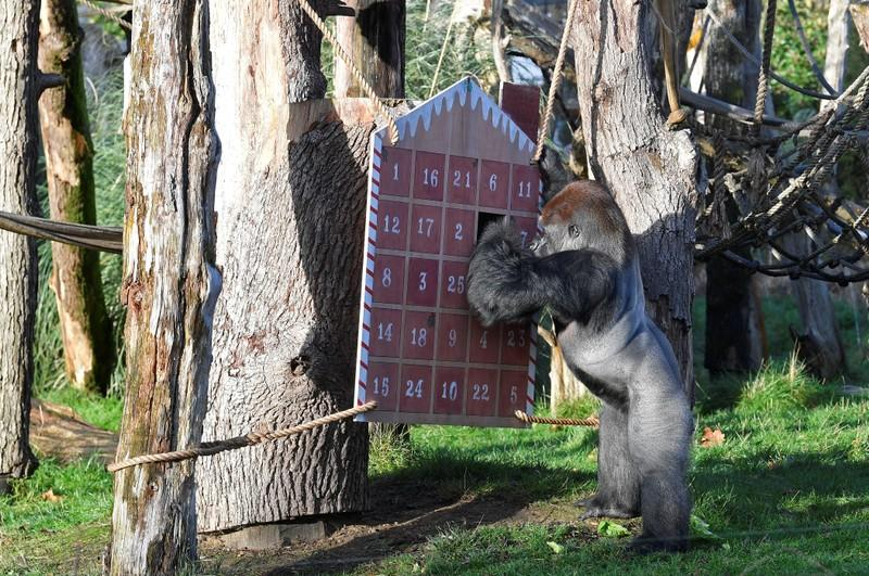 Stockings and puddings as London Zoo animals get Christmas treats