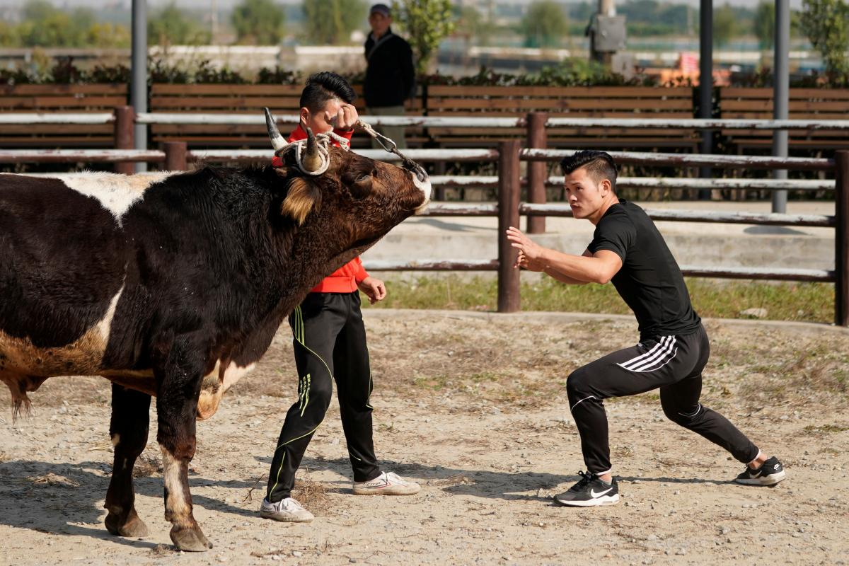 Enter the Bull: Fighters mix kung fu and bullfighting in China