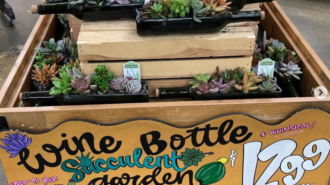 These Wine Succulent Gardens From Trader Joe's Are Blowing Up On Instagram