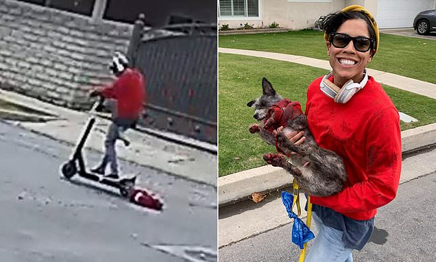 Woman drags tiny dog named zebra while riding an electric scooter