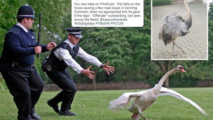 On-the-run Emu leads cops on Hot Fuzz-style police chase through Oxfordshire village – and is STILL at large