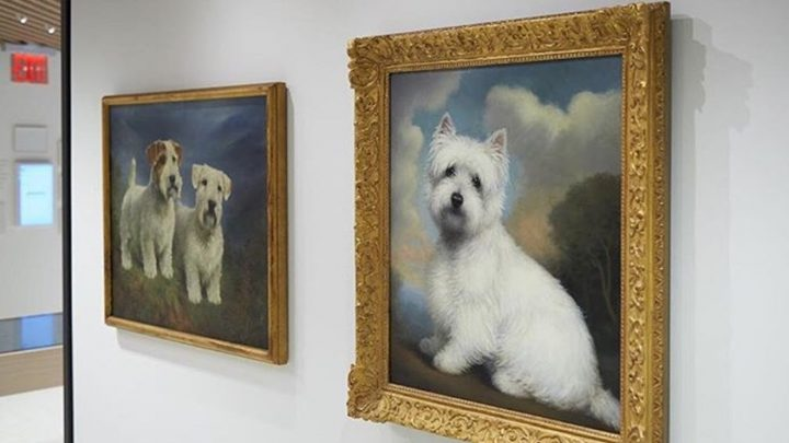 Bark All About It! The American Kennel Club Museum of the Dog to Open in NYC