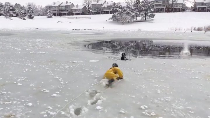 Colorado Firefighters Plunge Into Icy Water to Save Dog Caught in Frozen Pond