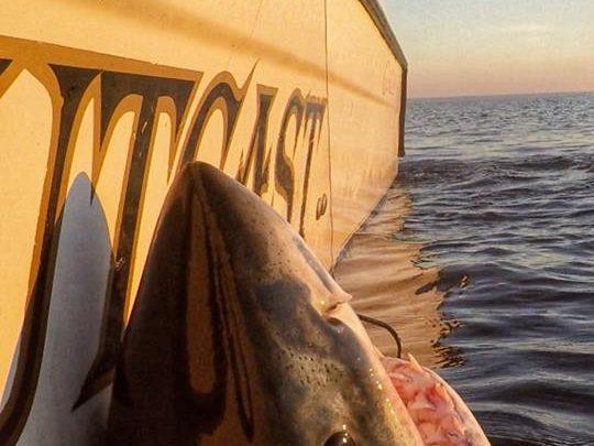 South Carolina fisherman hooks massive great white shark: 'It's like hooking an elephant'