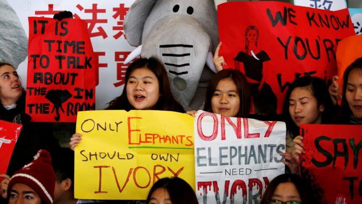Hong Kong bans domestic sale of ivory