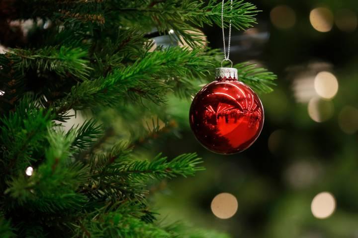 Edmonton Christmas tree pickup begins this week