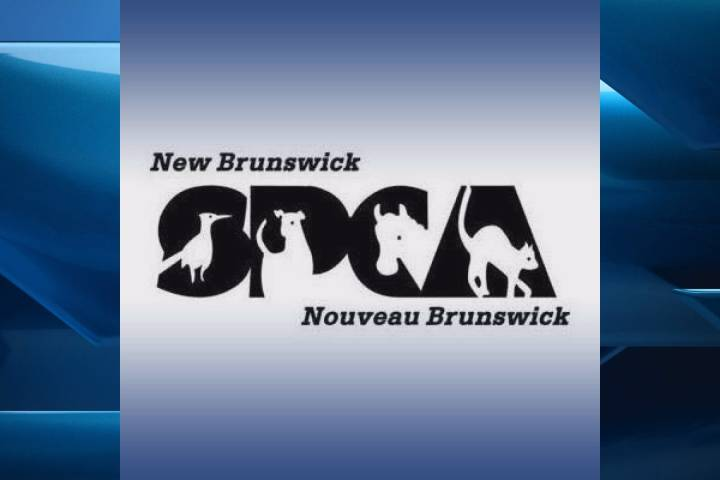 N.B. man faces possible jail term in cruelty death of dog left to starve
