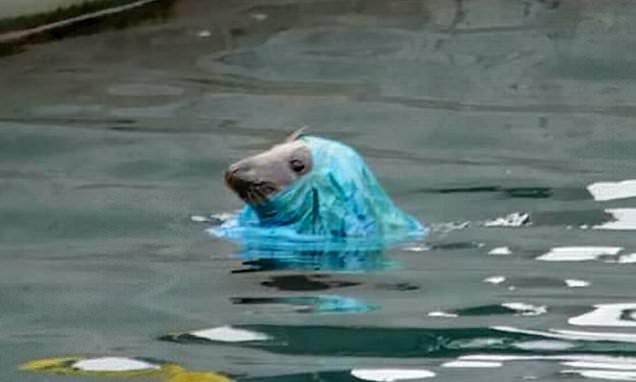 BBC Springwatch's CHRIS PACKHAM: MILLIONS of animals die eating litter