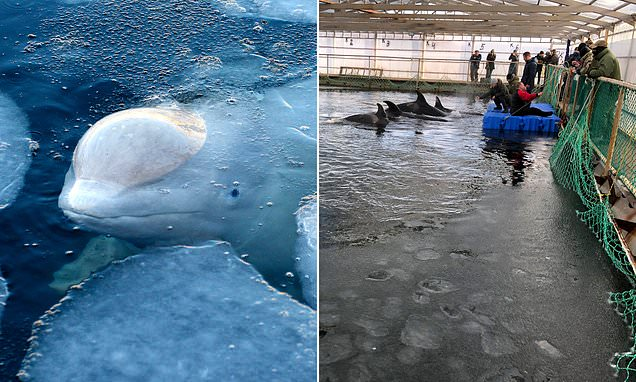 Owners of Russian 'whale prison' charged with illegal capture