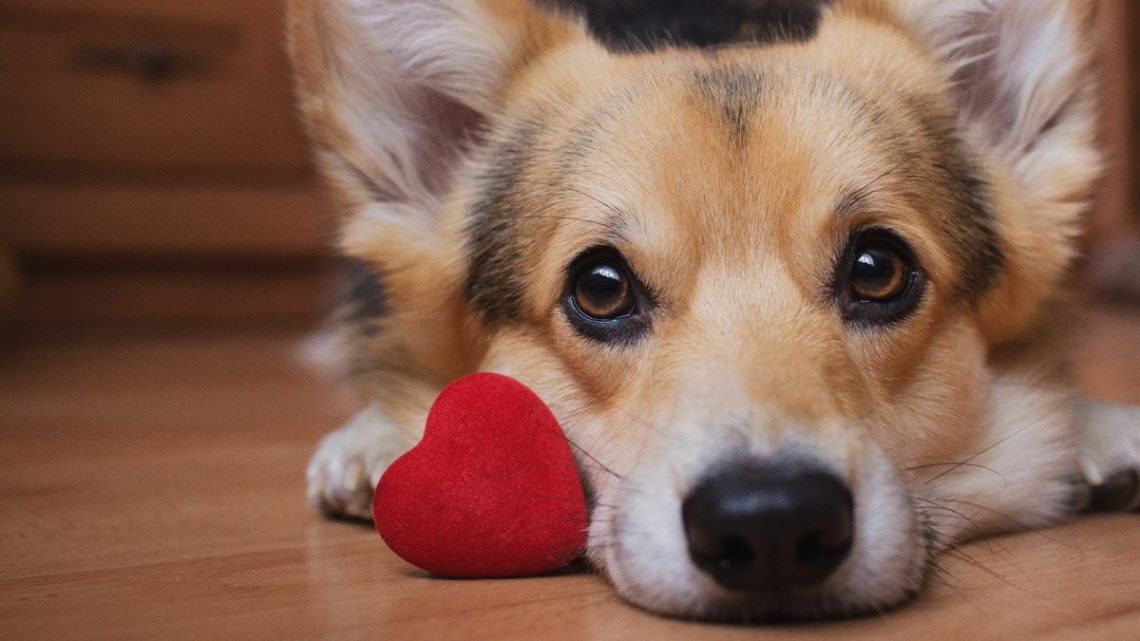 35 Captions For Your Dog's Valentine's Day Instagram That They'll Really Dig