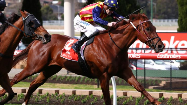 Exodus from Darren Weir's stable begins as owners move horses