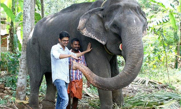'Granny', oldest elephant in captivity, dies aged 88 at Indian temple
