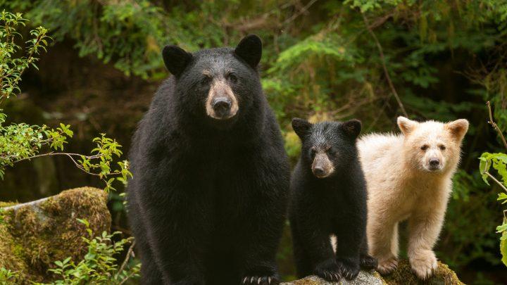Ryan Reynolds reveals his true, terrifying bear encounter: 'We screamed bloody murder'