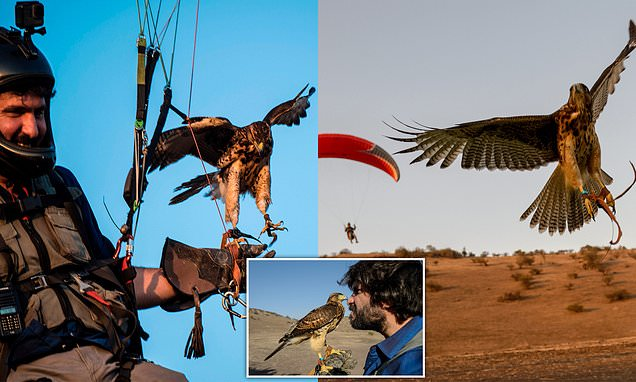 Chilean paraglider teaches 10-month-old pet hawk how to fly