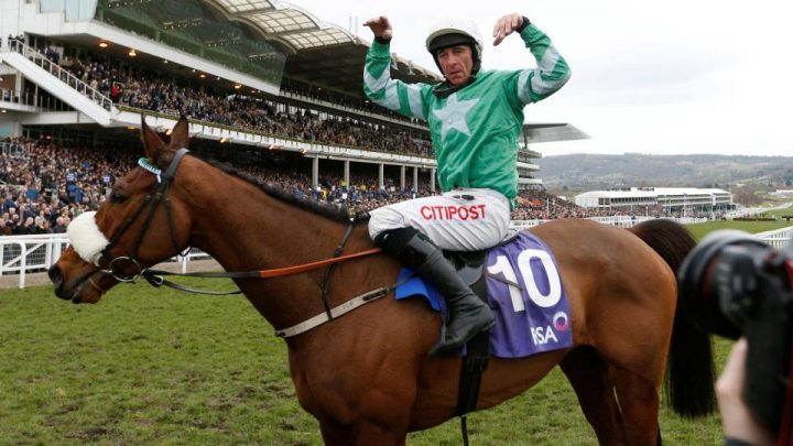 Presenting Percy: When will Presenting Percy run next? Gold Cup favourite returned to winning ways in the Galmoy