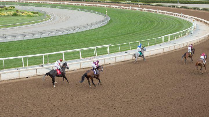 21 horses have died at legendary Santa Anita track since December
