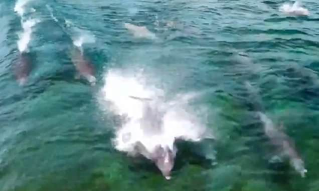 Surfers shocked as they are joined by a pod of dolphins