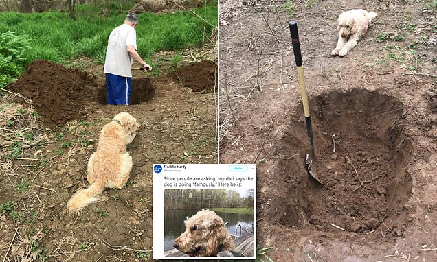Photos show man digging a grave for his dog while the pet watched