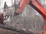 David Attenborough documentary has viewers in tears over orangutan's plight