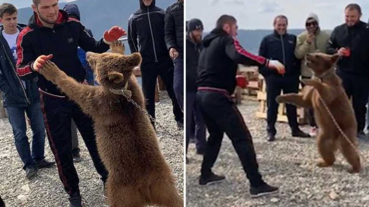 Watch as UFC star Khabib wrestles with 'old friend' bear he used to brawl with as young child