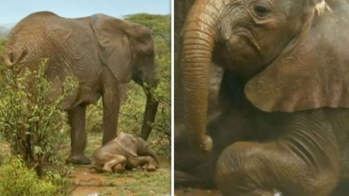 Earth From Space on BBC: Viewers in TEARS over 'heartbreaking' baby elephant scenes