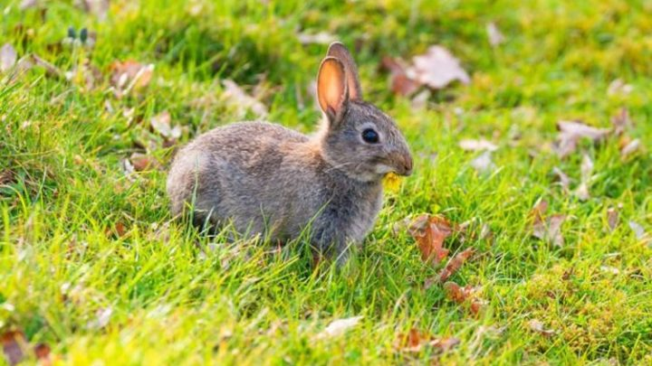 Easter traditions: Why we love our beautiful bunnies