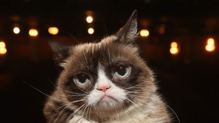 In the Wake of Grumpy Cats Passing, We Can't Help But Wonder Where the Other Meme Pets Are