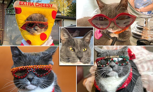 A near-blind feline named Sunglass Cat has gone viral