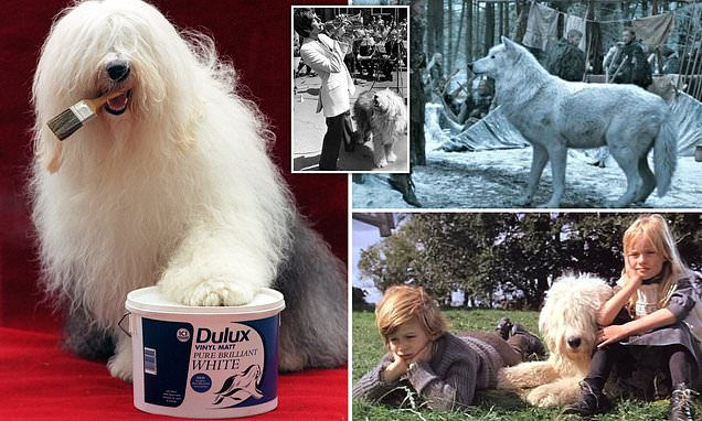 The end of the Dulux dog? Old English Sheepdog faces extinction