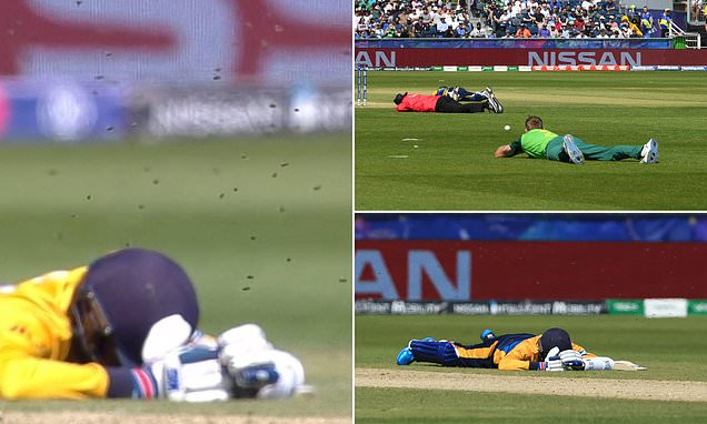 South Africa's World Cup clash with Sri Lanka halted by swarm of BEES