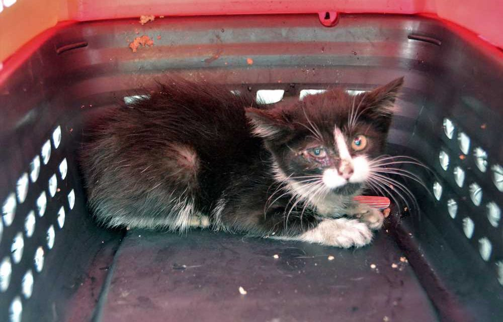 Cops' 5-hour rescue operation for kitten trapped in car engine