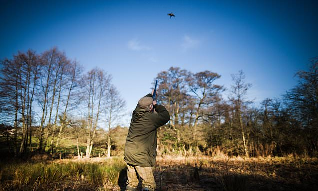 Waitrose ends sale of game birds shot with toxic lead
