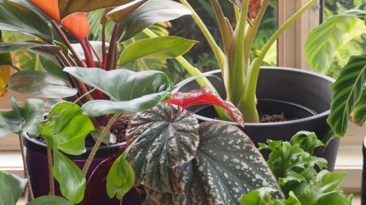 The 'hipster heroin' of indoor plants