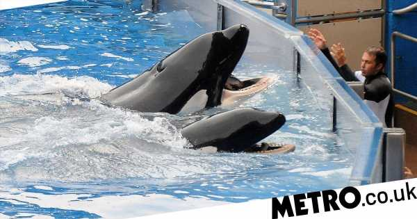 SeaWorld trainers say killer whales were so stressed they'd self-harm