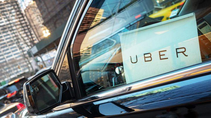 Solo Uber ride for orphaned baby bird to Utah rehab center