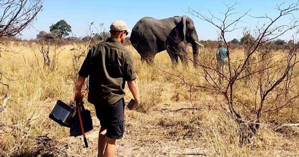 Meghan and Harry share new photos from personal trip to mark World Elephant Day