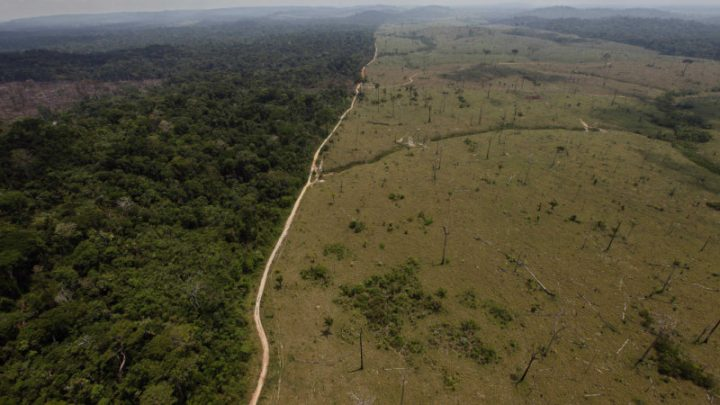 Amazon doesn't need Germany's biodiversity funds, says Brazil leader
