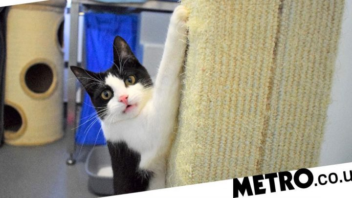 Moomin the cat learns to walk again after being dumped in an alleyway